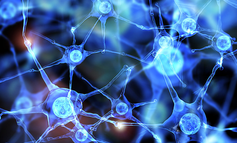 Neurología funcional: diferencias entre dopamina y serotonina | El Paso, TX Quiropráctico