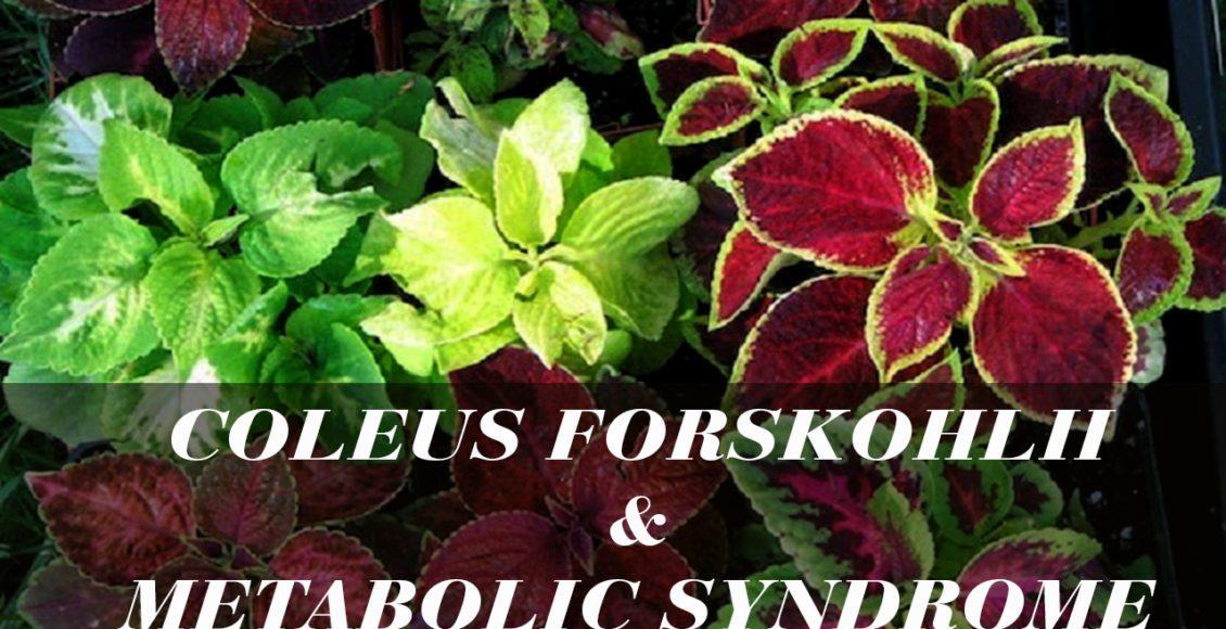 Coleus forskohlii puede ayudar con el síndrome metabólico